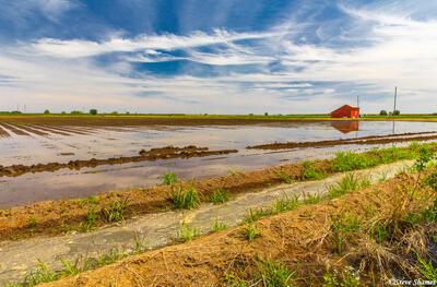 Flooded Farmlands Field