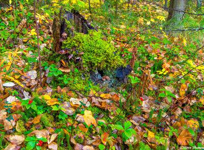 wasilla alaska, forest floor