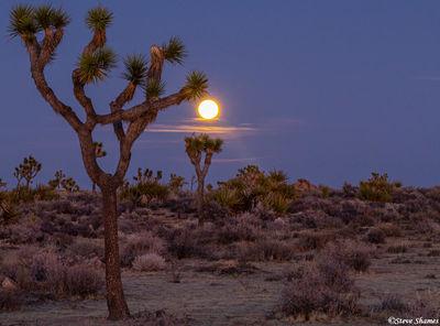 joshua tree, national park, southern california, full moon