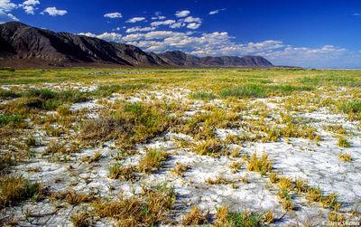 black rock desert, gerlach, nevada