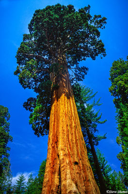 sequoia national park, giant tree, living organism