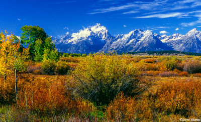 grand tetons, national park, wyoming, fall colors