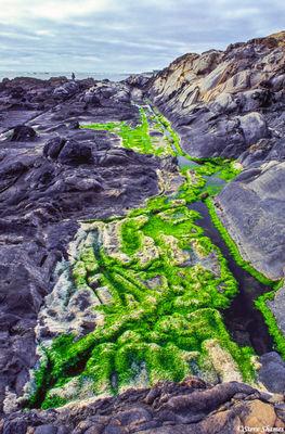 jenner, green algae,sonoma county, california