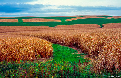 iowa farmlands, cornfields