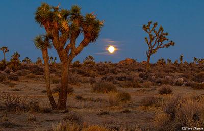 full moon, joshua tree national park, southern california