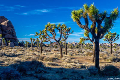 joshua tree national park, southern california, mojave desert