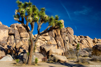 joshua tree, national park, southern california, rock formations