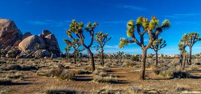 joshua tree national park, southern california