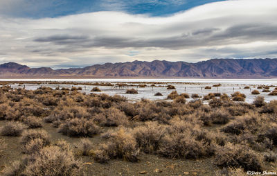 winnemucca, alkaline dry lake, nevada