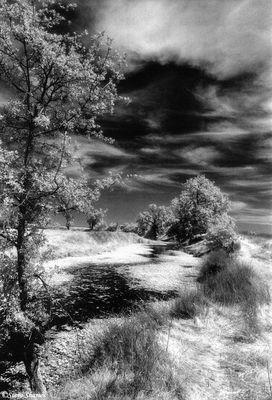 lincoln california, black and white infrared