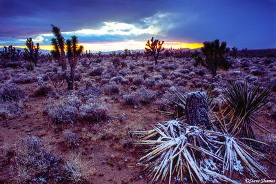 mojave national preserve, california, desert snow
