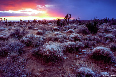 mojave national preserve, california, desert sunset