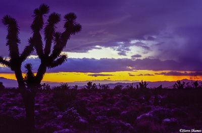 mojave desert sunset, national preserve, california