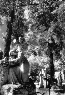 morelia cemetery, mexico