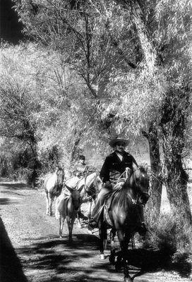 morelia, mexico, horses