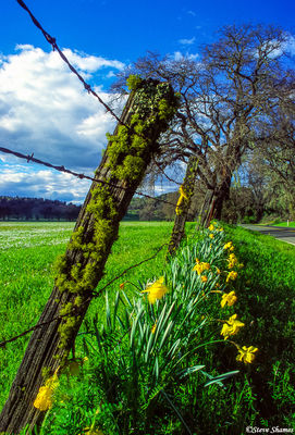 mossy fence post, sacramento valley, california