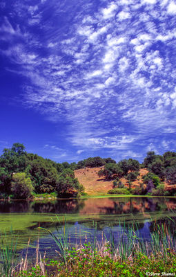 napa valley, northern california, country scene, fabulous sky