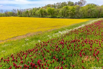Natchez Trace Spring Colors