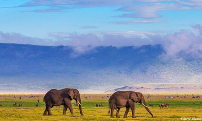 ngorongoro crater, elephants, tanzania