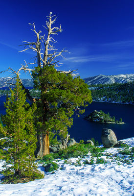 lake tahoe, emerald bay, old tree