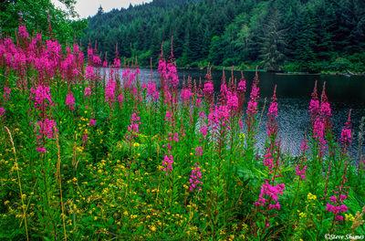 oregon coast, flowers
