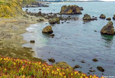 sonoma county, california, pacific seashore