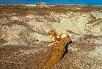 petrified forest, national park, arizona