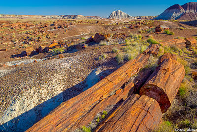 petrified forest, national park, arizona, logs