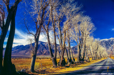 owens valley scene, tree lined road, mountains, california