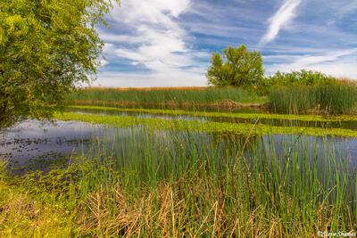 Sacramento Valley Marshlands