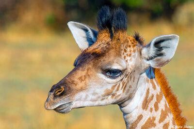 Serengeti-Giraffe Face Close Up