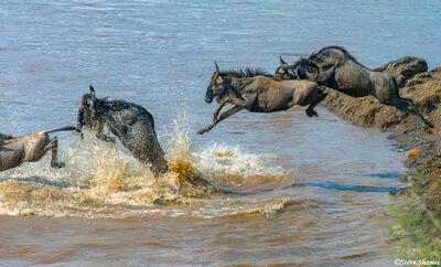 Serengeti-Jumping in the Mara