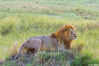 Serengeti-King of the Termite Mound