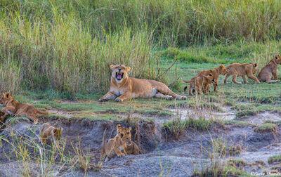 Serengeti-Lion Day Care