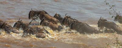 Serengeti-Pandmonium