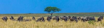 Serengeti Plains Africa Scene