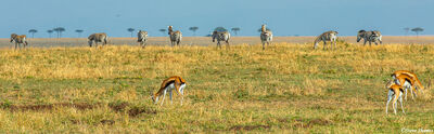 Serengeti Plains Scene