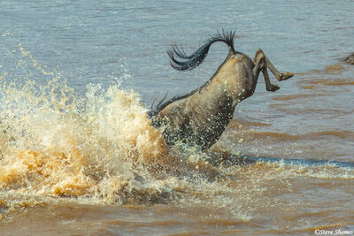 Serengeti-Splash Down