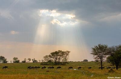 Serengeti-Sun Rays