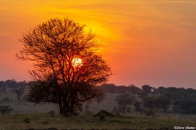 Serengeti-Sunrise