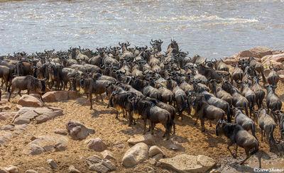 Serengeti-Waiting To Cross