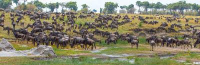 Serengeti-Wildebeest Hillside