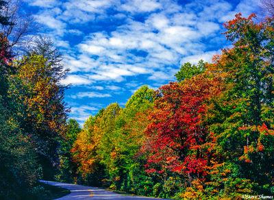 shenandoah fall colors, national park, virginia