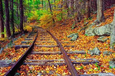 railroad tracks, shenandoah, national park, virginia, dead leaves