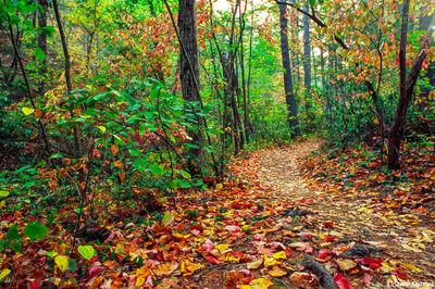 shenandoah, national park, virginia, leaf covered trail