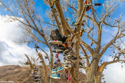 Shoe Tree Middlegate Nevada
