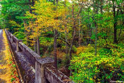 rustic looking bridge, shenandoah national park, virginia
