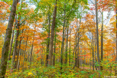 Smokey Mountains Fall Color