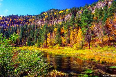 black hills, south dakota, spearfish canyon, fall color