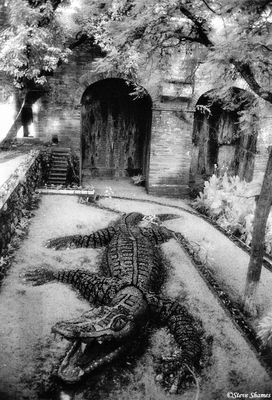 guanajuato, mexico, stone alligator